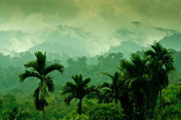 Palm Oil Studies