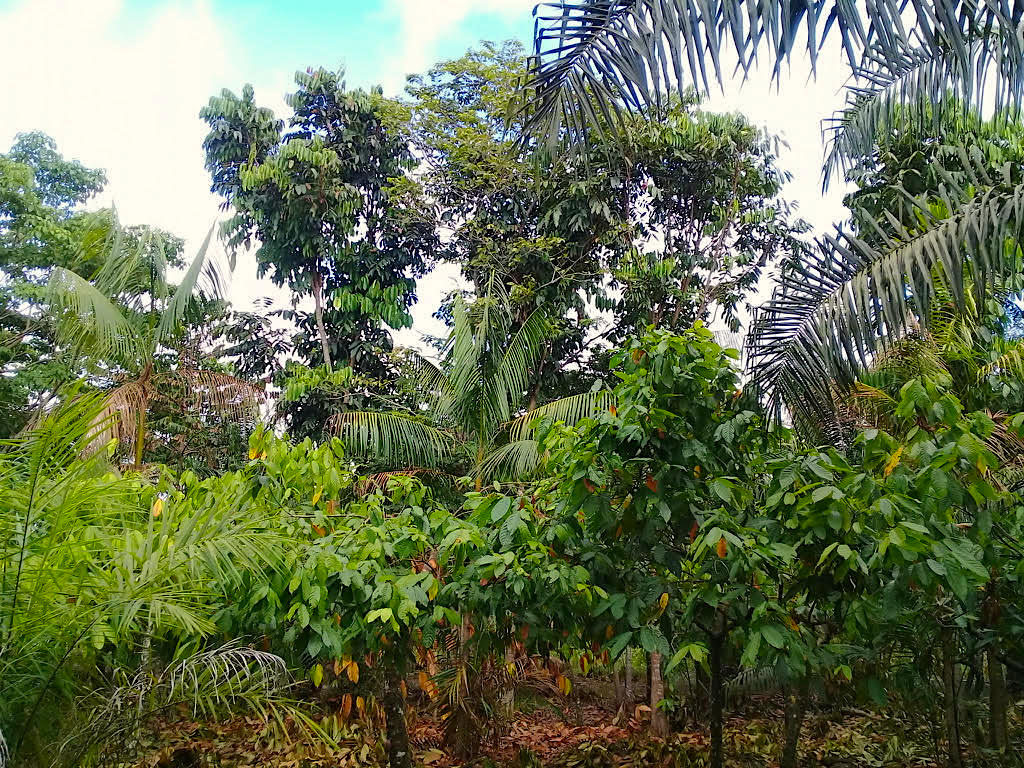 The Center for Sustainable Palm Oil Studies (CSPO)
